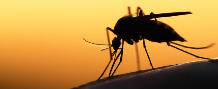 the-worldwide-threat-to-the-biodiversity-of-insects-8211-global-research