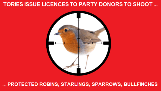 england-and-wales-authority-issues-licences-to-property-developers-to-kill-protected-robins-starlings-blackbirds-sparrows-bullfinches-8211-global-research