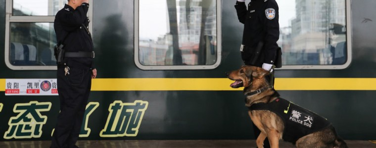 china-clones-sherlock-holmes-of-police-dogs-to-cut-time-and-cost-of-k9-training