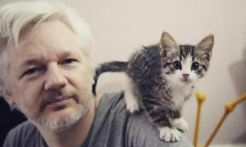 after-7-years-of-deceptions-about-assange-the-us-readies-for-its-first-media-rendition-8211-global-research