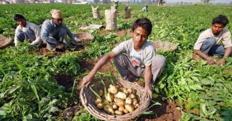 pepsico-eist-143.000-dollar-van-vier-indiase-boeren-omdat-ze-aardappelsoort-teelden-die-gebruikt-wordt-voor-lays-chips