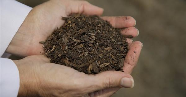 green-revolution:-washington-state-to-allow-composting-of-human-beings