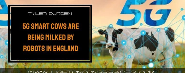 5g-smart-cows-are-being-milked-by-robots-in-england-|-light-on-conspiracies-–-revealing-the-agenda