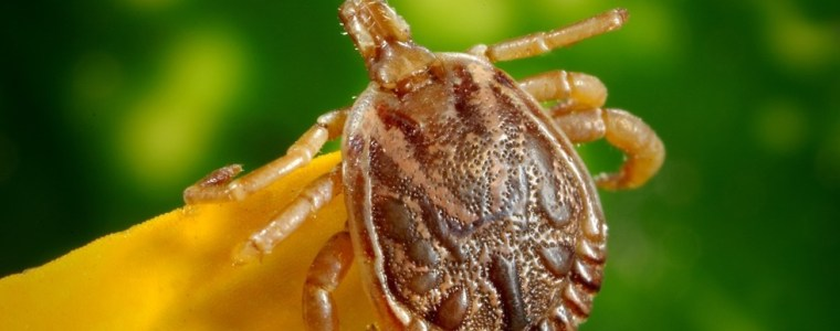 congress-investigating-possible-secret-'bioweaponization'-of-insects-by-the-pentagon