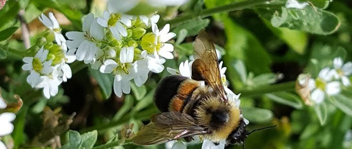 lawsuit-challenges-trump-epa's-200-million-acre-expansion-of-bee-killing-pesticide-–-global-research