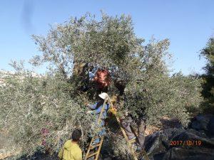 3-oktober-enschede:-palestijnse-boeren-in-vredesweek-belicht-–-docp