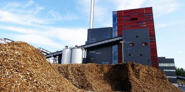 biomassa-–-waarom-regering-doorgaat-met-grootste-klimaatblunder-–