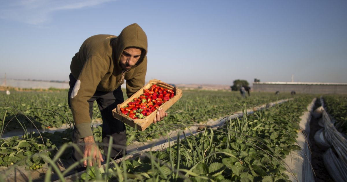 why-palestine-will-lose-the-unfair-trade-war-with-israel- -opinion