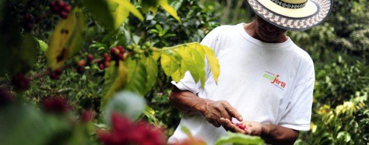 25-miljoen-koffieboeren-kunnen-niet-van-hun-koffie-leven-–-dewereldmorgen.be