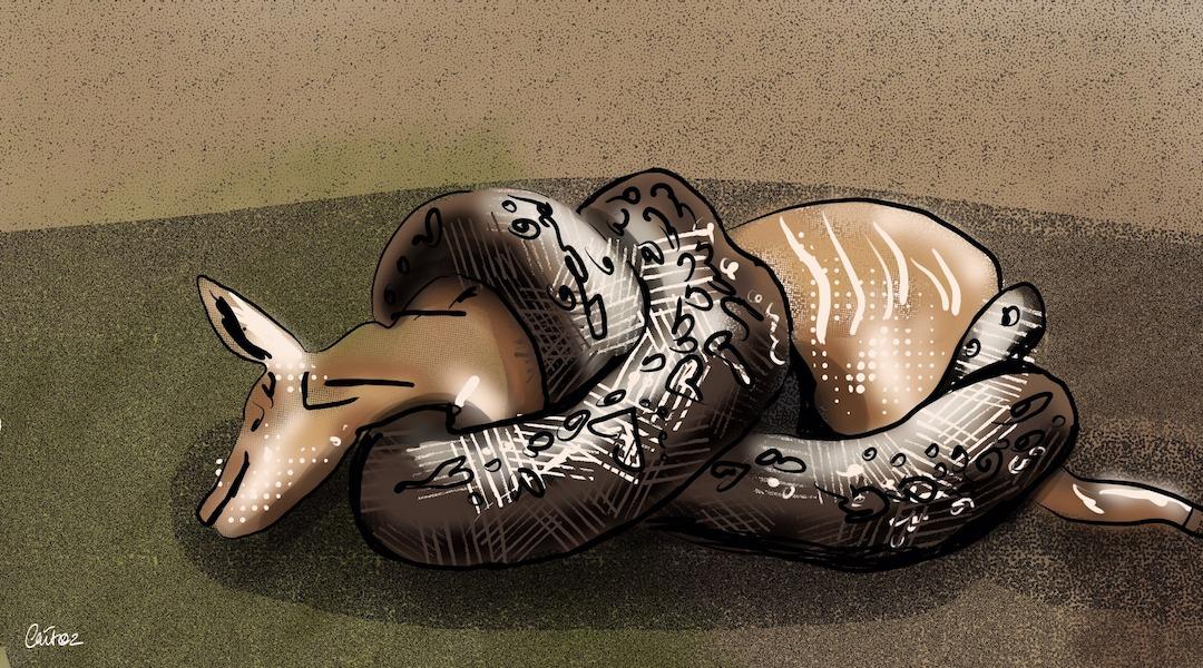 the-modern-us-war-machine-kills-more-like-a-python-than-a-tiger