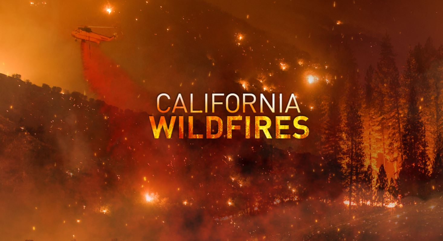 california-wildfires-and-how-bark-beetles,-dead-trees,-and-poor-forest-management-significantly-contribute-to-them-(full-measure)-–-activist-post