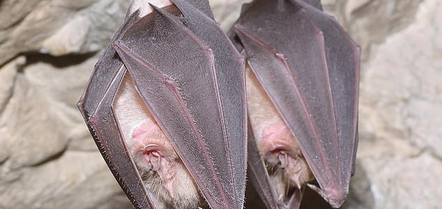secret-bat-cages-at-wuhan-lab-where-virus-experiments-were-planned