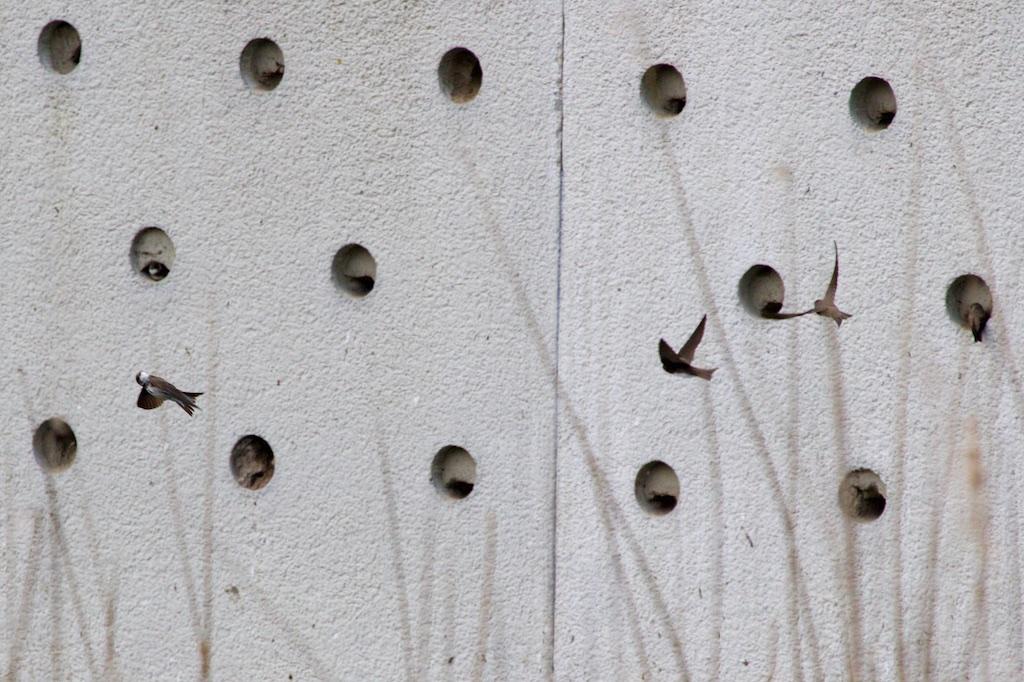 oeverzwaluwwanden-werken-(bijna)-altijd…-–-interessante-tijden