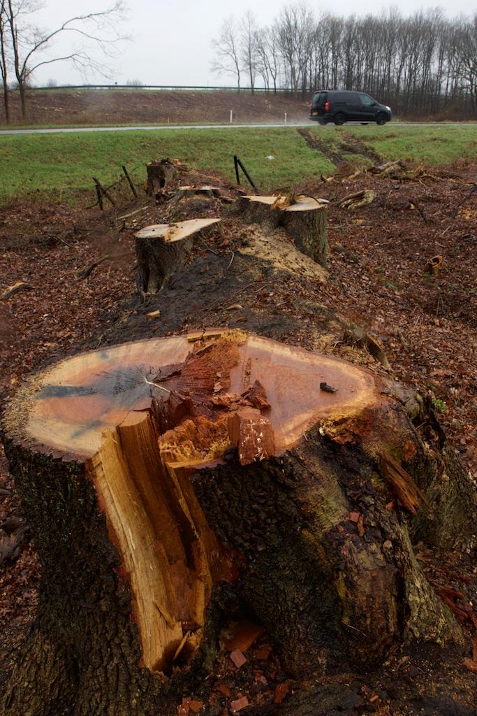 bomenkap-'schone'-energie-(sdg7)-helpt-uitrol-5g-(sdg11)-–-interessante-tijden