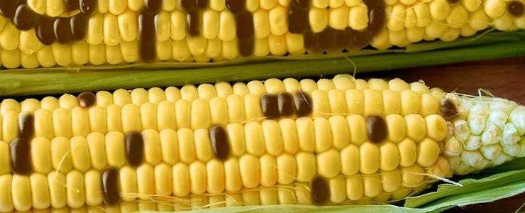 """de-""""farm-to-fork""""-groene-agenda:-hoe-de-eu-en-de-davos-wef-cabal-van-plan-zijn-om-de-landbouw-te-controleren"""