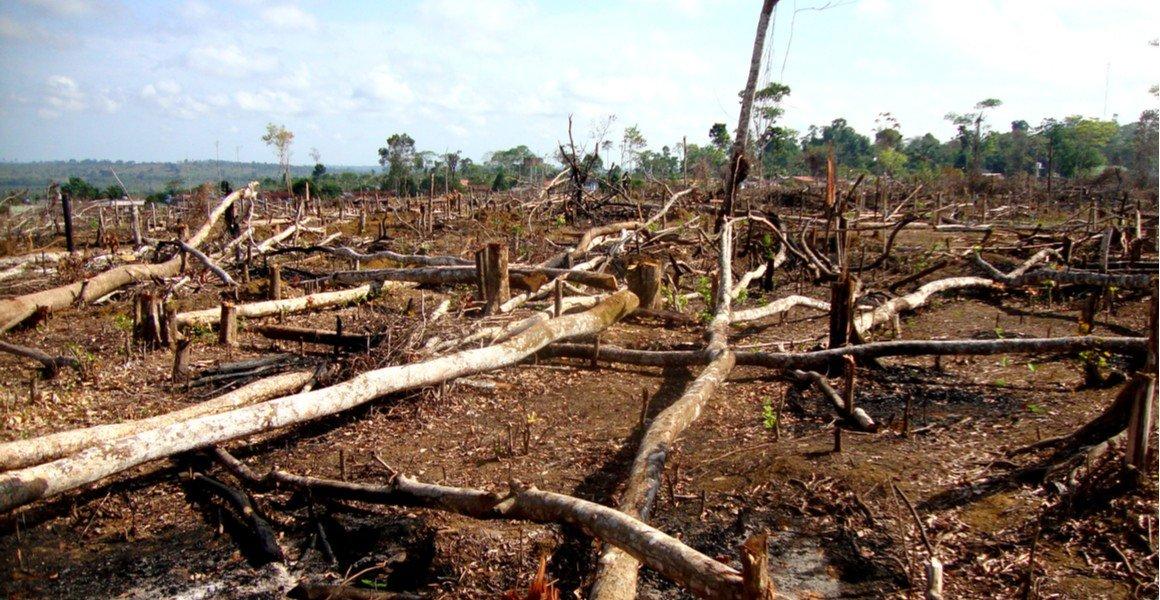 analyse-waarschuwt-dat-biodiversiteit-wereldwijd-onder-'veilige-grens'-zit-in-aanloop-naar-cop-15