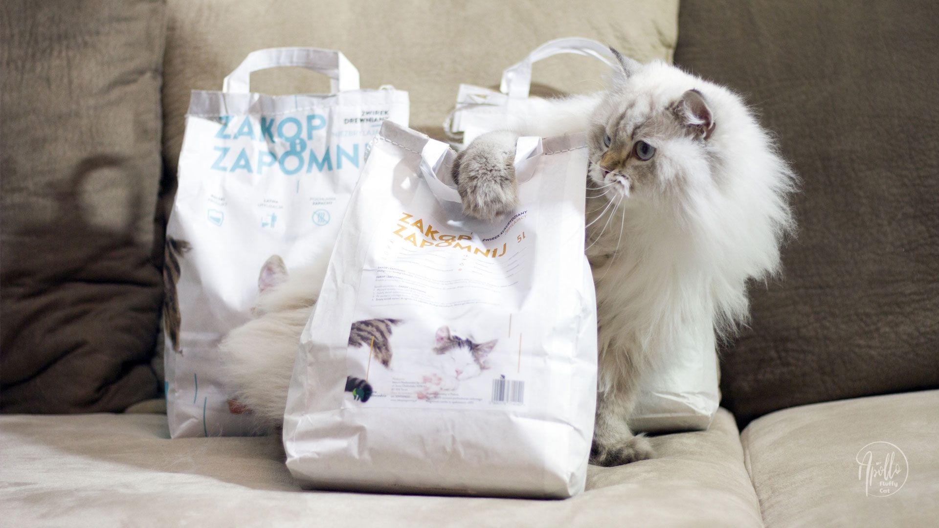 Eco cat litter Zakop i Zapomnij