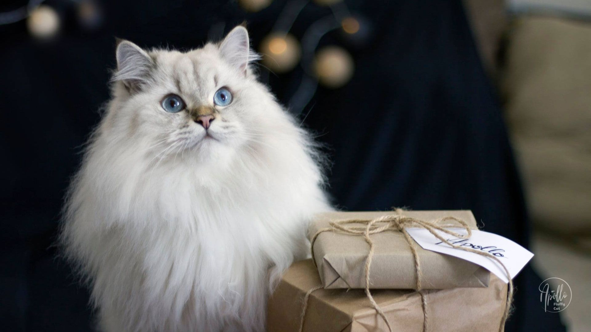 How to keep your cat safe and healthy during Holidays & New Year's Eve