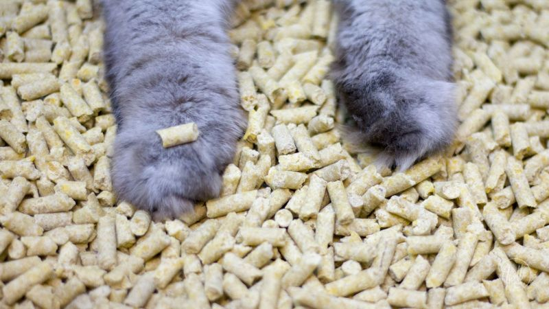Eco-friendly ways to dispose any kind of cat litter