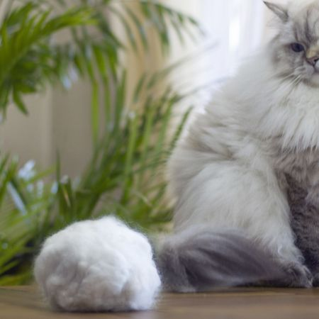 What are hairballs and how to prevent them