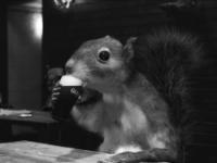 Apollo Beer Blog