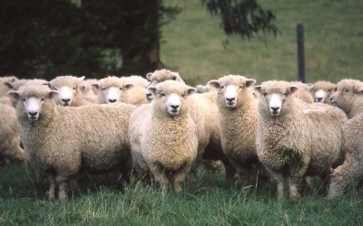 Are You Following the Herd?