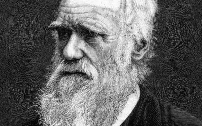 Evolution Isn't the End:  Why Christian Apologetics is More than Just Defeating Darwinism