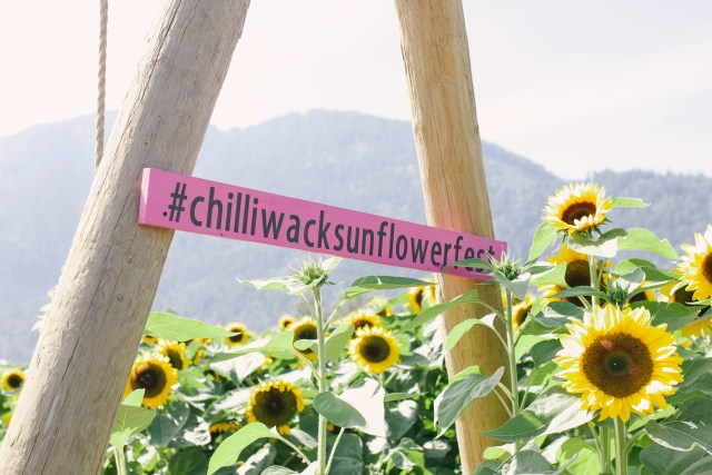 Chiliwack Sunflower Festival
