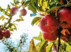 «Κομφούζιο»: Πρόσκληση για τη δεύτερη φάση της δράσης για τους αγρότες από 13/7