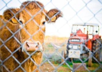 Προς 2η προκήρυξη η βιολογική κτηνοτροφία