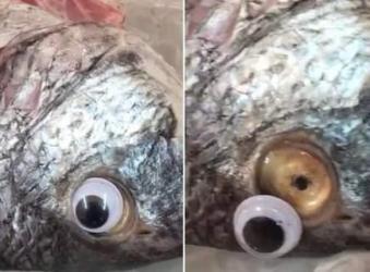 Εστιάτορας στο Κουβέιτ έβαλε ψεύτικα μάτια στα ψάρια για να δείχνουν φρέσκα