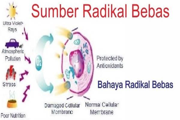 Bahaya Radikal Bebas: Senyawa Pencuri Mematikan