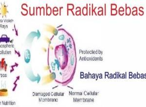 bahaya radikal bebas