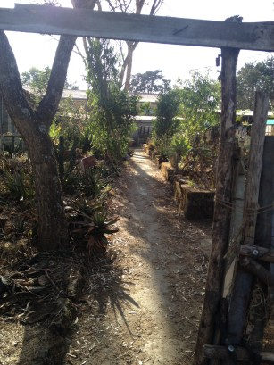Specimen Garden at the University of Addis Ababa