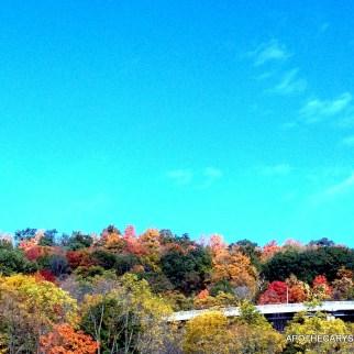 Fall Colours and Concrete-Hamilton Mushroom Hunt