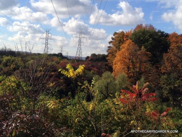Fall colours, Hamilton Ontario 2013