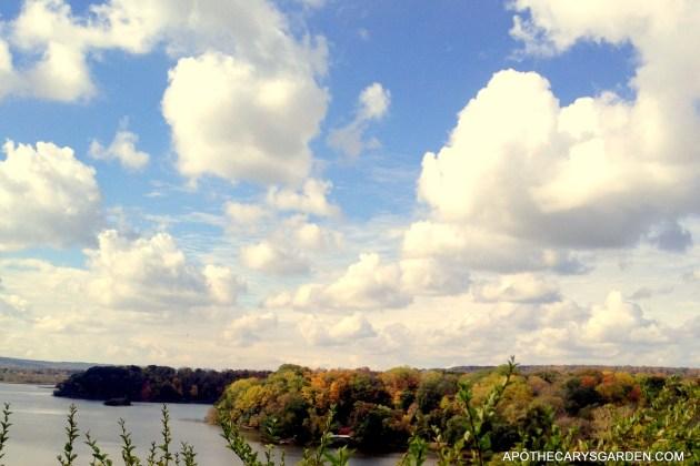 Cootes Paradise, Hamilton Ontario. Fall 2013