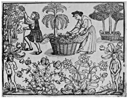 Medieval Apothecary and apprentice in the garden- courtesy the Guttenberg Project.