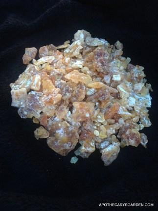"Fresh Frankincense Frereana- from Somaliland-"" Maydi or Yemenite Chewing Gum"