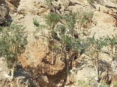 maydi-trees3