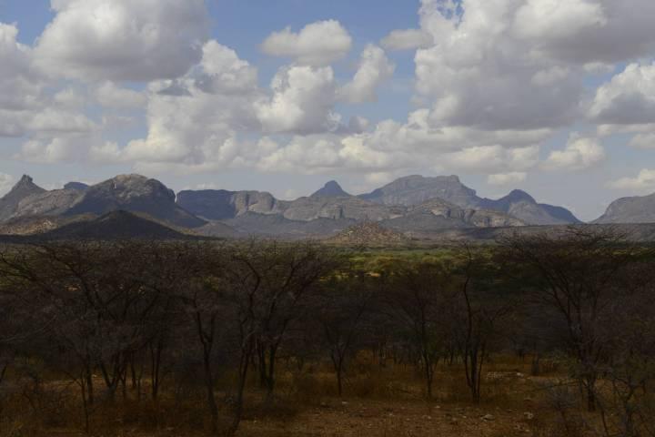 Northern kenya Mrrh and Acacia