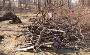 Solstice wood (several piles like this)