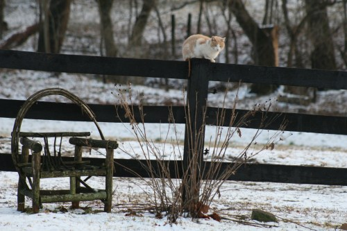Ghosty chillin' on the fence.