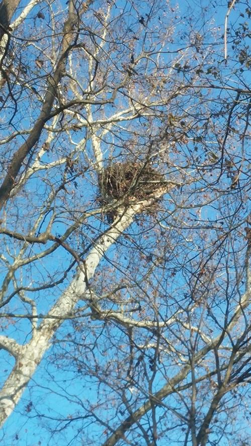 Destination Eagle's Nest