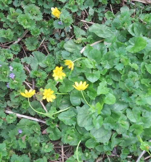 Yard flowers