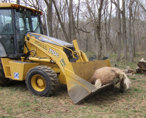 Front end loader is helpful for moving the heavy carcass around