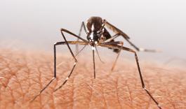 Insectenbeten: vervelend en soms gevaarlijk