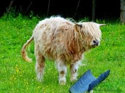 Τετράποδοι Σκωτσέζοι - Four-legged Scots