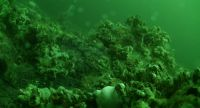 Ocean Network Canada Deep Water Cam