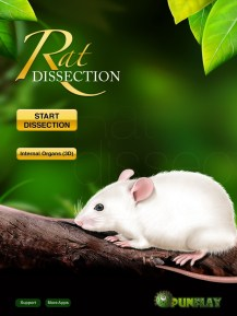 Rat-Dissection-01